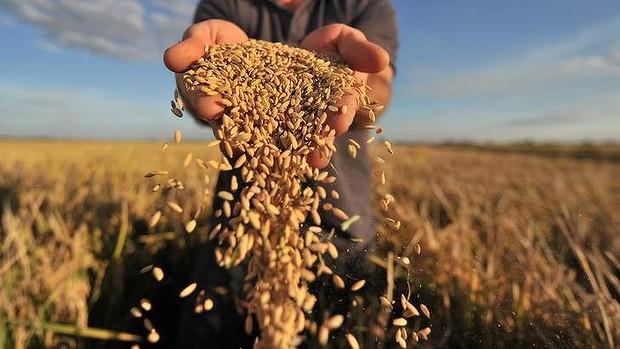 Фото с сайта agroinfo.com