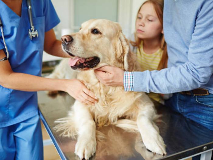 Часто врачу необходимо самостоятельно усмирить зверька и попытаться понять причины болезни