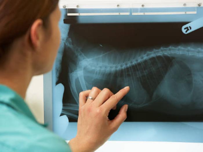 Каждый ветеринар должен овладеть различными приборами диагностики