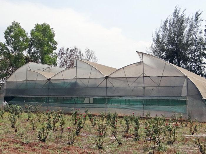 Что стоит выращивать в теплице