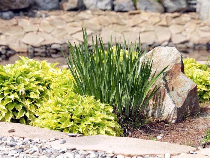 Ландшафтный дизайн подойдет для тех, кто любит делать красивые сады, лужайки и город