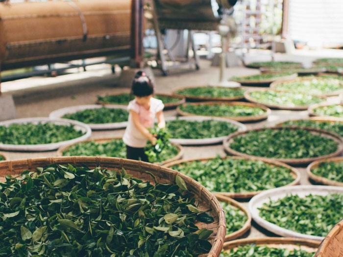 Чай можно хранить довольно длительное время, если соблюдать нормы хранения
