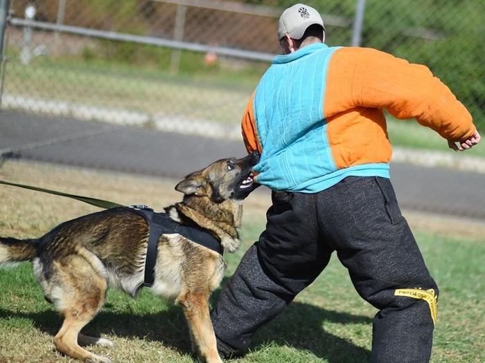 В дальнейшем можно заняться дрессурой, создавать индивидуальные программы для подготовки животных