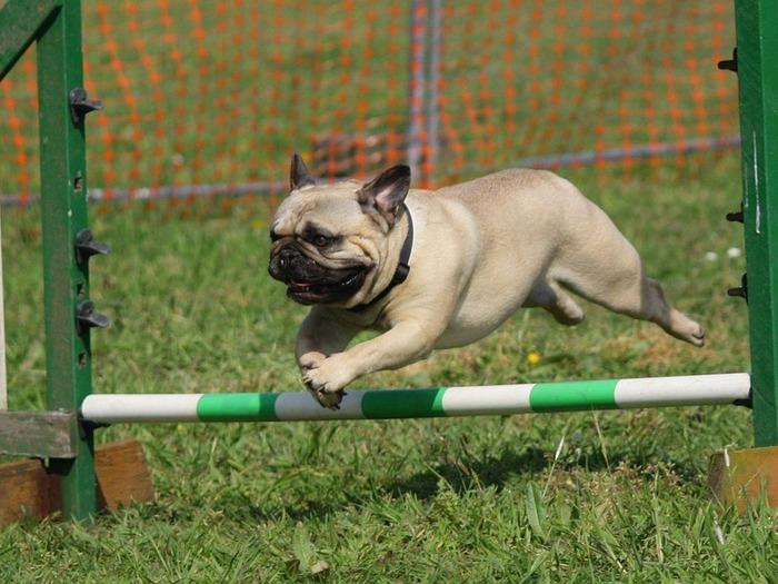 Можно стать фитнес-инструктором для собак
