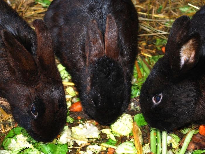 Нормы питания одинаковы для самцов и самок в состоянии покоя